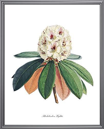 Weißer Rhododendron druckbarer Weinlese-Blumen-Illustrations-botanischer Wandkunst-Druck