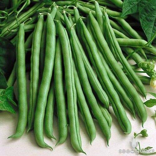blue lake pole beans - 1