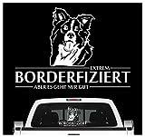 Siviwonder Auto Aufkleber Border Collie Hund INFIZIERT Hundeaufkleber 30cm White