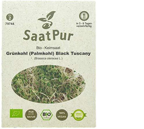SaatPur Bio Keimsprossen - Keimsaat für Grünkohl Sprossen, Microgreens - 20g - (Palmkohl) Black Tuscany