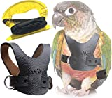 Avianweb EZ Rider Bird Harness with 8 Ft Leash (Small Conure (i.e, Greencheek))…