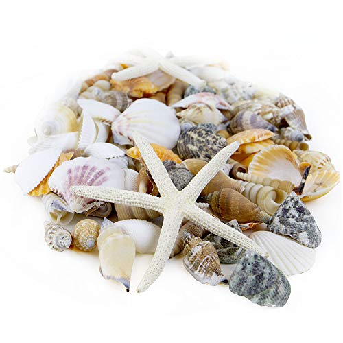 CYS EXCEL Seashell Assorted Mix with Pencil Finger Starfish (Approx. 100 PCS, 1'-2')   Nautical Décor Vase Fillers   Beach Decoration Seashells