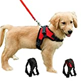 Best Dog Harnesses - Dog Harness Mesh Breathable Comfortable Pet Vest No Review