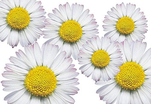 Autocollants pour voiture, Floral Design: Flower Set 06 Mini 36 Pieces