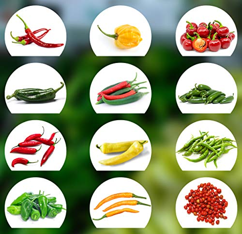 Chili Samen Set | 12 Varianten Chili Saatgut von scharf bis mild | Anzuchtset mit Chili Premium- Natursamen |einfache Aufzucht/Anzucht für Garten und Balkon