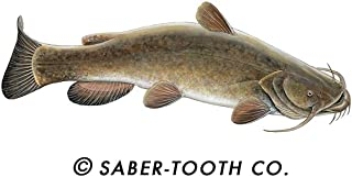 Saber-Tooth Co Flathead Catfish Fish Decal Sticker ~ Fishing & Wildlife Series (Small-7 x 2.75-Facing as Shown)