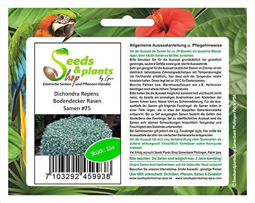 Stk - 15x Dichondra Repens Bodendecker Rasen Pflanzen - Samen #75 - Seeds Plants Shop Samenbank Pfullingen Patrik Ipsa
