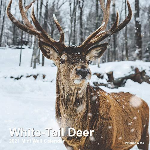 2021 Mini Wall Calendar: White-Tail Deer