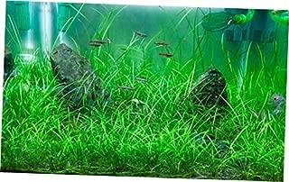 echinodorus tenellus aquarium