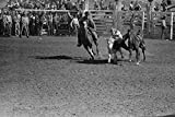 Two cowboys ride the wild steer between them before one of them dismounts to bulldog the steer From the rodeo at the San Angelo Fat Stock Show in San Angelo Texas Poster Print by Russell Lee (24 x 36
