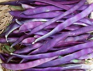 Louisiana Purple Pod Bean Seed - Pole Beans Garden Vegetable Seeds 4 Ounces