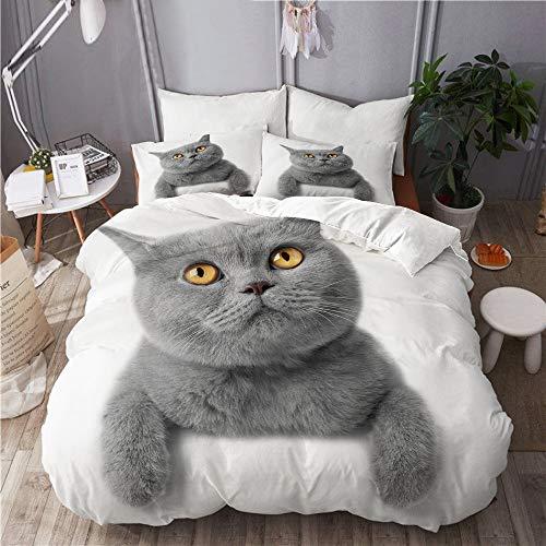 665 Bettwäsche-Set,Mikrofaser,Studio Grau Kätzchen Katze Weiß Rasse Britisch Kurzhaar Grau Entzückend,1 Bettbezug 220x240 + 2 Kopfkissenbezug
