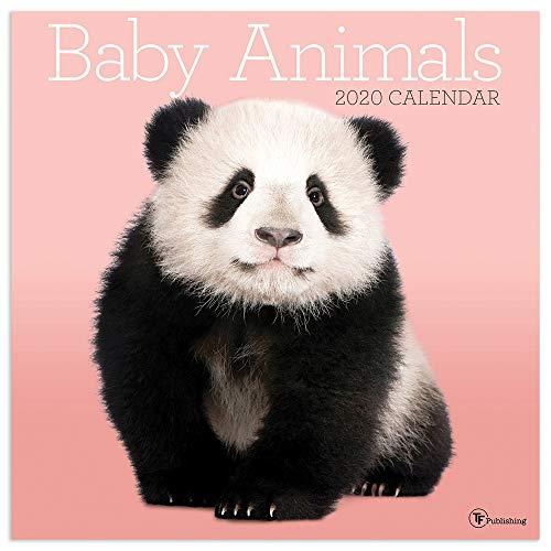 TF Publishing, Baby Animals Wall Calendar 2020