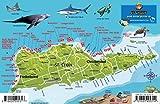 St. Croix USVI Dive Map Fish ID Virgin Islands Franko Maps Waterproof Fish Card