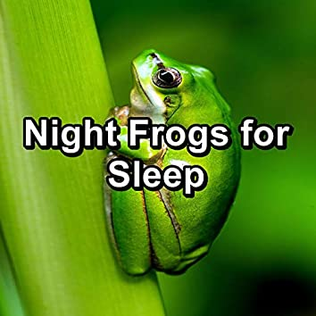 Night Frogs for Sleep
