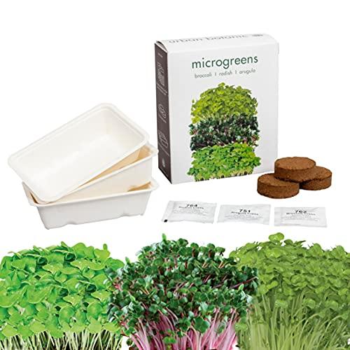 Microgreens Growing Kit   3 Variety Pack Non-GMO   Broccoli   Radish   Arugula   Healthy Sprouts  ...