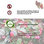 Ressources Naturelles Huile Essentielle Gaulthérie Bio 1 Unité #2