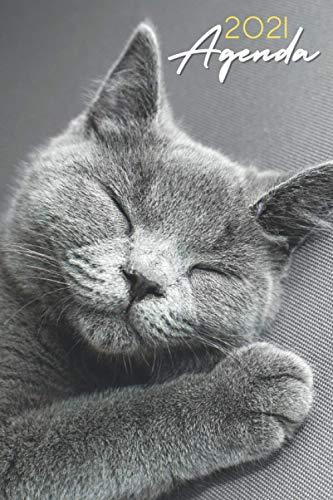 Agenda 2021 Gatos: agenda 2021 semana vista gato - planificador semanal y mensual 2021 A5 - agenda 2021 de enero a diciembre - una Semana en dos Páginas - agenda anual 2021 - regalo gatos mujer hombre