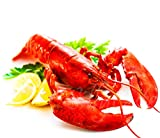 SillyCute Seafood: Live Lobsters from Maine, Alive and Kicking, 1.0~1.2 lb each, Pack of 6,, Overnight Delivered to Your Door