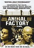 Animal Factory [Edizione: Regno Unito] [Edizione: Regno Unito]