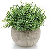 Velener Mini Plastic Artificial Plants Benn Grass in Pot for Home Decor (Green) artificial grass Nov, 2020
