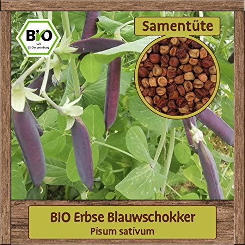 Samenliebe BIO Gemüse Samen   Erbsen Samen (Pisum sativum)   BIO Erbsensamen Gemüsegarten   Gemüsesamen Anzucht   Saatgut für 7 Pflanzen