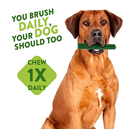 Whimzees Natural Dental Dog Chew Long lasting, Variety Box Mixed Shapes, Small, 56 Pieces