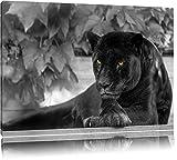 schöner schwarzer Panther schwarz/weiß auf Leinwand, XXL