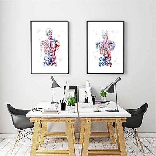 SDFSD 2 stuks canvas kunstdrukafbeelding modulaire spieren mens schilden skelet anatomie schilderij aquarel medisch lichaam wand decoratie 55 x 73 cm
