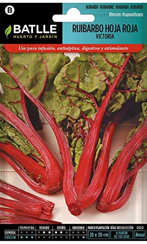 Semillas de Flores - Ruibardo hoja roja Victora - Batlle