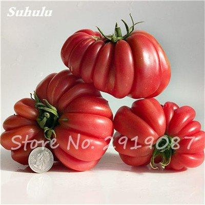 Tomate volantée Jaune Graines rares 120 Pcs Heirloom Gratin tranches mexicain légumes biologiques résistant à la sécheresse pour une saine Garden 2