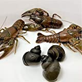 Toledo Goldfish Live Crayfish and Trapdoor Snail...