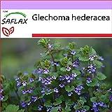 SAFLAX - Heilpflanzen - Gundermann/Gundelrebe - 75...