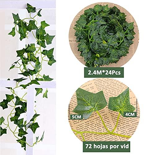 Homvik Plantas