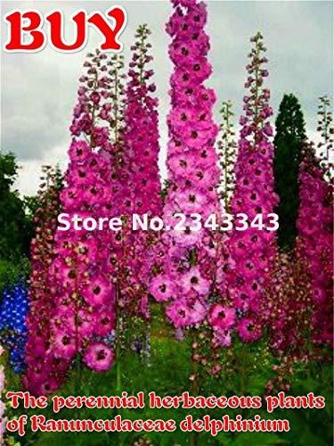 Vistaric 100 Pcs/sac Delphinium Graines Nouveau Mélange Emballage Graines De Fleurs Géant Consolida Graines De Jardin De Graines De Fleurs De Jardin Plantes Bonsaï Arbre Semillas Jaune