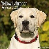 Yellow Labrador Retriever 2021 Wall Calendar