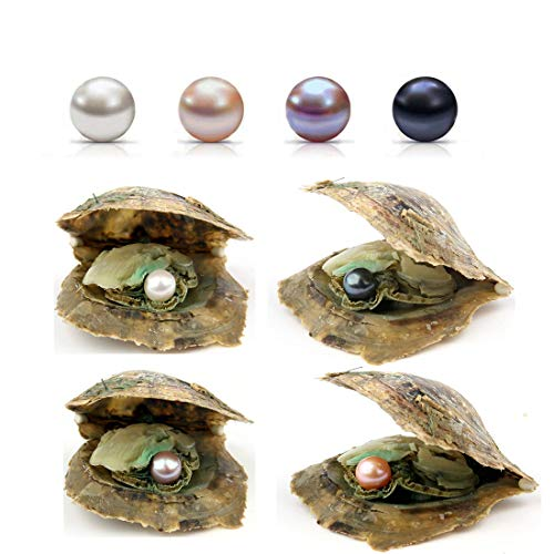 POSHOPS 50PC Akoya Oysters with Pearls Inside Wholesale Round Pearl Saltwater Akoya Oysters Bulk for Christmas Party