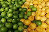 Kejora Fresh Lemons + Fresh Limes Bundle ( 3 lb lemon + 3 lb limes )