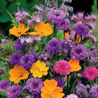 Duftende Blüten - Eine Mischung aus einjährigen Pflanzen mit duftenden Blüten - 120 Samen