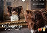 Chihuahuas - Cool and Cute (Wandkalender 2020 DIN A4 quer)