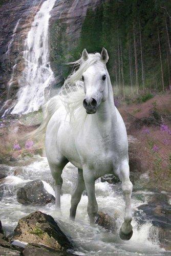 empireposter Bob Langrish - Weißes Pferd Tiere Animals Horse Poster Plakat Druck - Grösse 61x91,5 cm