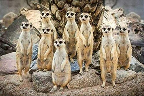 Tr674gs 1000-piece puzzle-animal puzzle-a group of meerkats-3D pattern puzzle-adult puzzle-family parent-child-puzzle solution-wall decoration puzzle