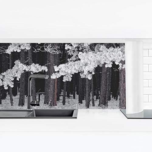Bilderwelten Crédence adhésive - Forest with Hoarfrost in Austria 100 x 350 cm Premium