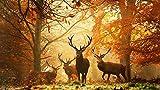 Puzzle 1000 Piezas -Ciervo Bosque Otoño Rayas