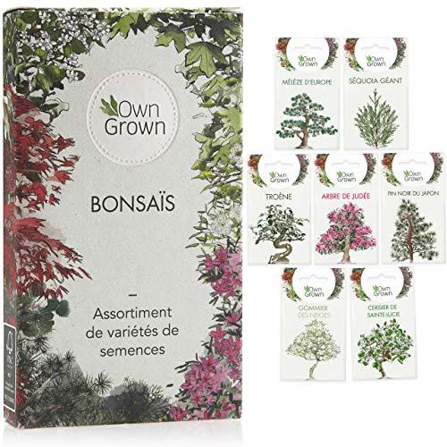 Set de graines bonsaï : Kit graines à planter avec 7 variétés de graine bonsai - Graines darbre bonzaï, plante pour petit jardin zen - Kit bonsaï de OwnGrown