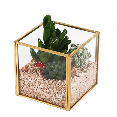 Cube glass terrarium for air plants