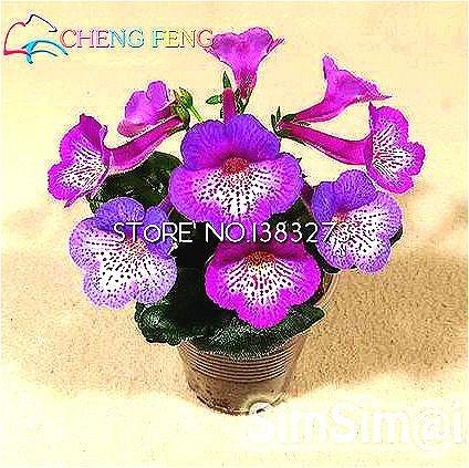Vente Hot 100 Plantes Pcs A Lot Gloxinia Graines vivaces à fleurs Bonsai 9 types Mini Fleurs Seed Pour jardin d'ornement *