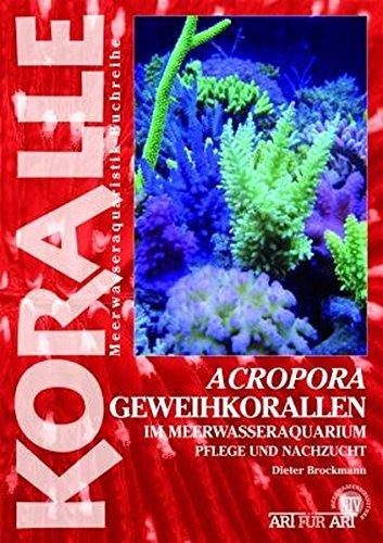 Acropora-Geweihkorallen im Meerwasseraquarium: Pflege und Vermehrung (Art für Art: Meerwasser)