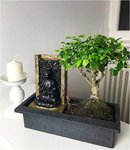 BALDUR Garten Bonsai-Baum mit dekorativem Buddha-Wasserfall;1 Stück Zimmerpflanze