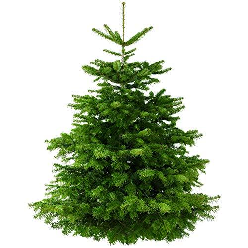 TANNENVERSAND Nordmanntanne frisch geschlagen ca. 160-180cm echter natürlicher Weihnachtsbaum